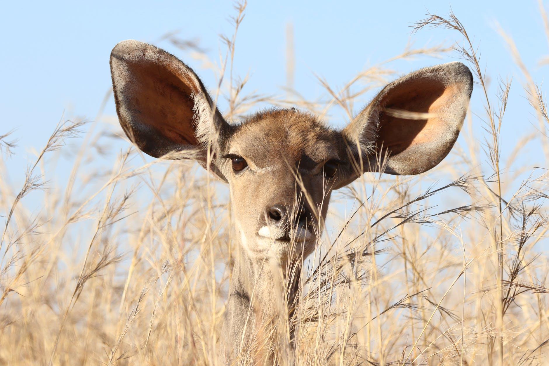 animal animal photography barbaric big